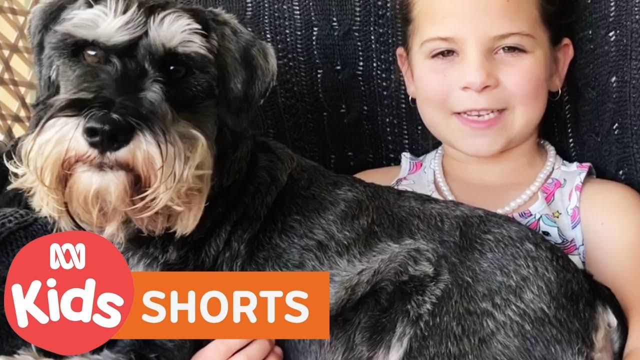 Pets 🐶 | Play School: Through The Windows  | ABC Kids