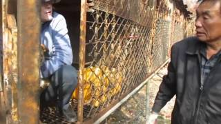 savekoreandogs s rescue from whole dog bbq house rescue in goyang south korea part 2