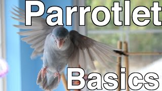 Parrotlet Care For Beginners | Topics