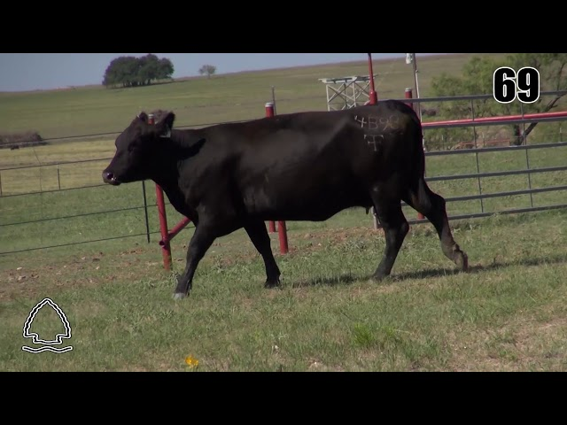 Pearcy Angus Ranch Lot 69