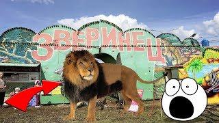 Good Boy Mark с братом едут в зоопарк и кормят животных.  Кормим верблюда!  Видео для детей.