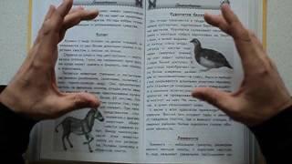 Как научить ребенка бегло читать.
