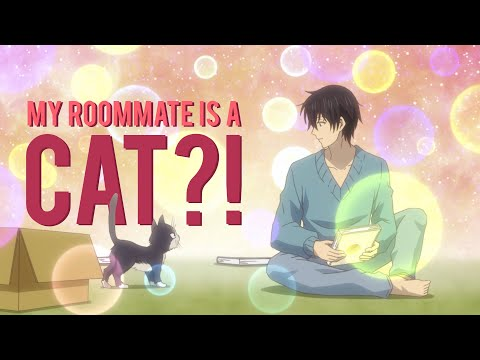 I Got A Cat Because Of ANIME?!