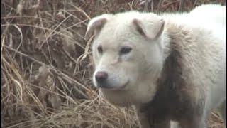 Dog's Face Has Swollen Because Of 'This' Around The Neck Choking Her (Part 1) | Kritter Klub