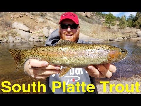 Trout Fishing Colorado's South Platte River