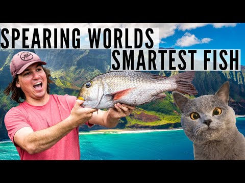Spearing The World's Smartest Fish {with Aaron's Animals!}