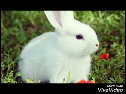 Les 11 plus beau lapins du monde youtube - Les plus beaux plafonds du monde ...
