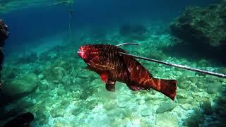 Ψαροντούφεκο Xειμώνας -
