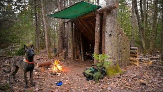 Building a Fort in the Woods with my Dog: Leveling the Ground, Trimming the Roof, Steak on the Fire.