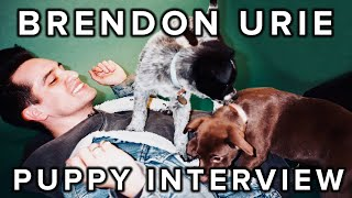 the puppy interview with brendon urie of panic at the disco