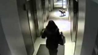 Собака и лифт