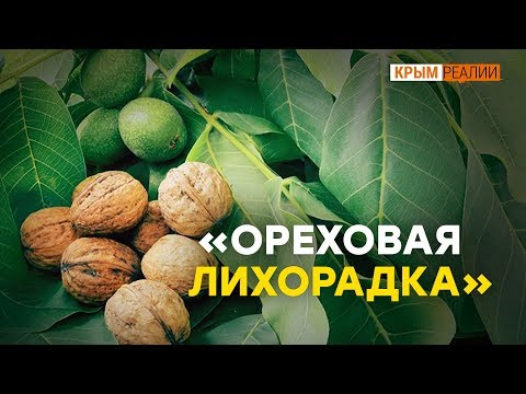 Как заработать на орехах в Крыму   Крым.Реалии ТВ