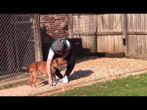 Volunteer Starkville: Oktibbeha County Humane Society