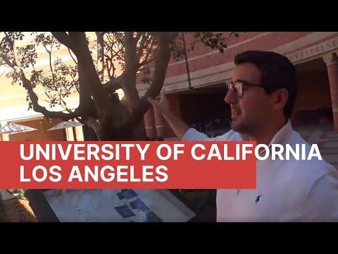 Обучение в UCLA. Прогулка по пляжу Santa Monica