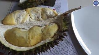 Đem sầu riêng chiên món lạ mà ngon/Durian fried crispy