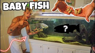 BREEDING BABY FISH to FEED MONSTER FISH!! *ultimate vlog*