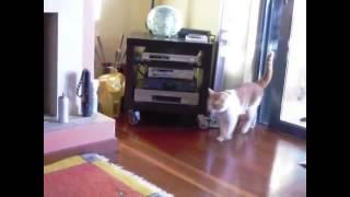 ssscat cat repellent