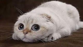 Упоротые картинки с котиками
