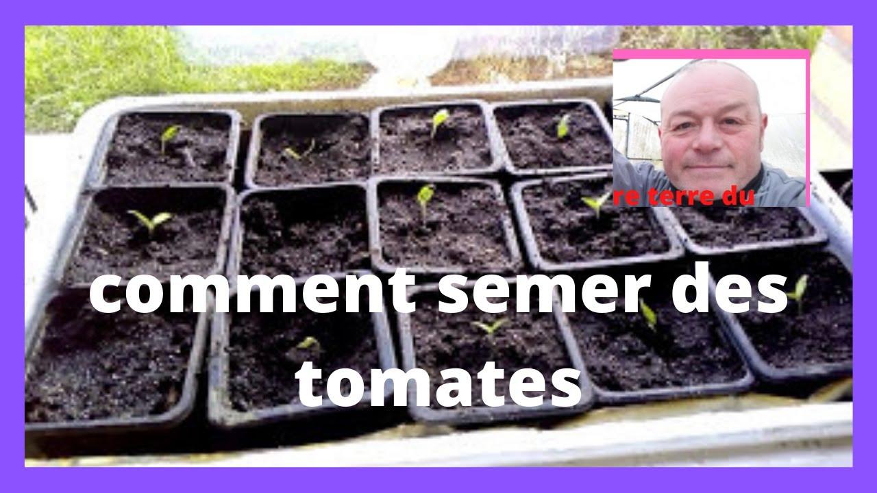 Que Faire Au Jardin En Janvier que faire au jardin en janvier : on seme des siberians !