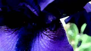 Repeat youtube video Goo Goo Dolls - Iris (lyrics)