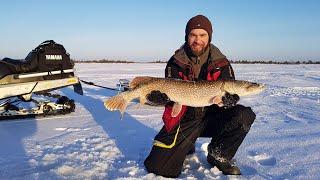 За трофейными окунями на снегоходе 2020 Зимняя рыбалка на окуня в Заболотье