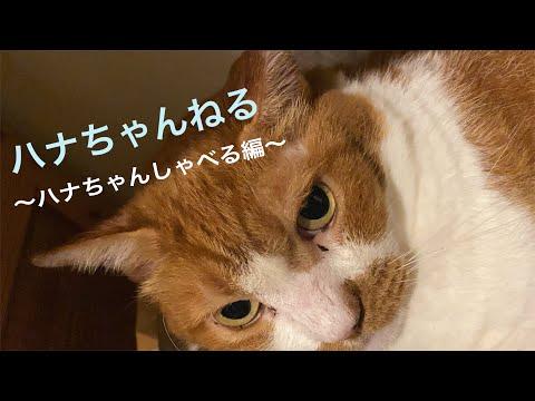 松居直美「ハナちゃんねる〜ハナちゃんしゃべる編〜」