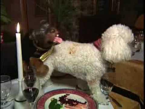Triumph The Insult Comic Dog Video