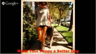 Dog Training Courses - Banish Any Bad Dog Attitude Dog Training Courses