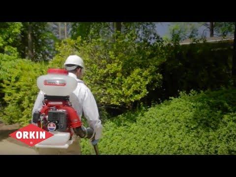 Soluciones Personalizadas Para El Control De Mosquitos | Orkin