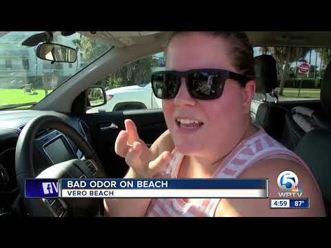 Beaches empty in IRC due to red tide