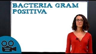 Bacteria Gram Positiva