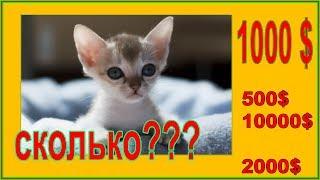 Цены на котят Сколько стоят самые маленькие котята в мире и самые большие котята в мире