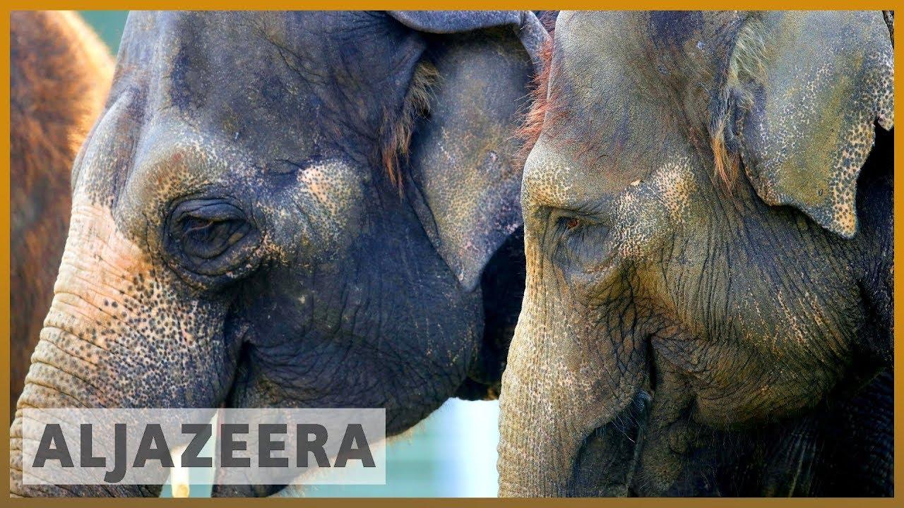 AlJazeera English:By the numbers: Illegal wildlife trade threatens species