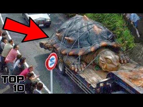 Top 10 Most Oversized Animals Around The World