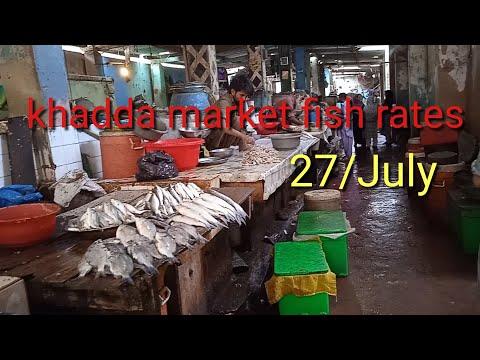  fish video fish rates khadda