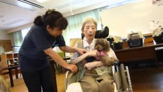 車椅子のお婆さまはセラピードッグを抱っこして下さいました。 お話する...