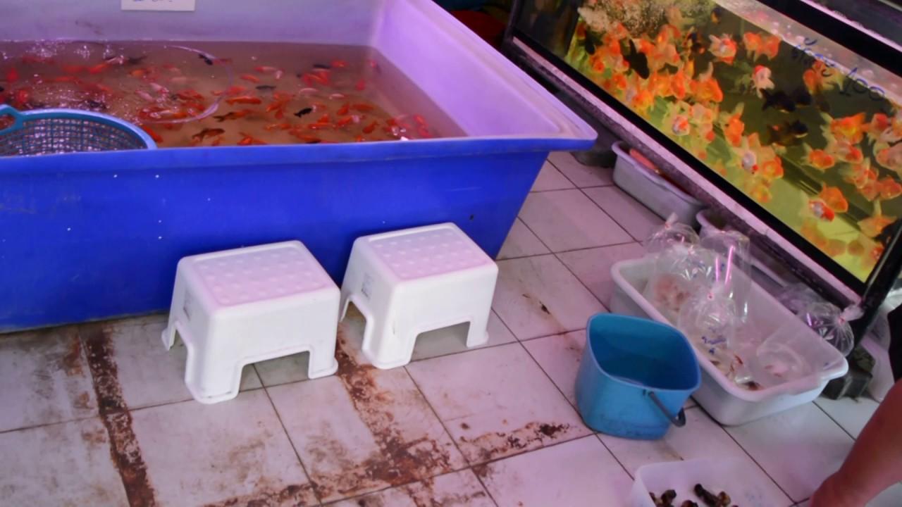 Лабиринтовые рыбки в Аквариф-шоп - YouTube