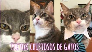 Mis Vídeos Favoritos de Porfirio el gato #gatos #comedia #tiktok