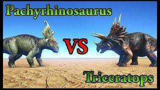 Pachyrhinosaurus VS Triceratops ARK Wiki: http://ark.gamepedia.com/...