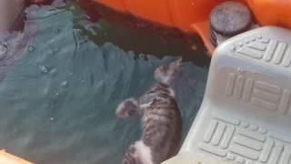 قط ميت في البحر
