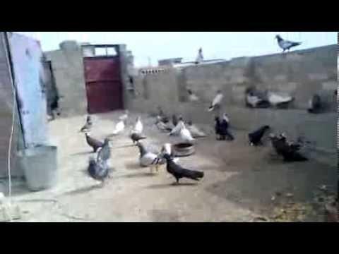 بقت بس الصور الطيور