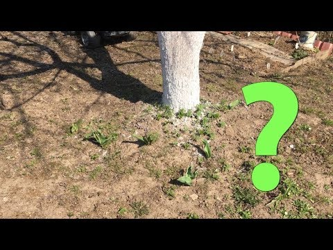 Огород под яблоней