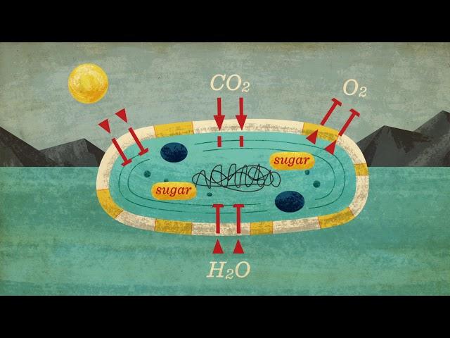 สิ่งมีชีวิตเซลล์เดียวเกือบจะทำลายล้างชีวิตบนโลกได้อย่างไร -  Anusuya Willis