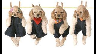 Собачий рынок. TOP-5. Dog. Сегодня в Одессе. Щенки. Супер няшки. Порода. Подарок. Продам собаку.