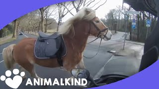 Runaway horse takes owner on wild chase thumbnail