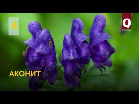 8 опасных растений Крыма