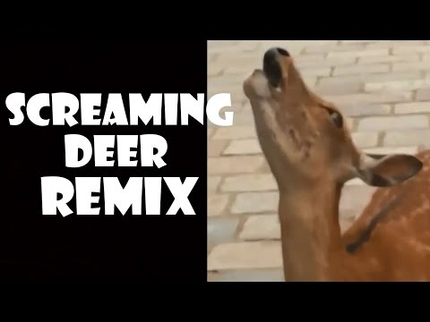 Screaming Deer - Remix Compilation