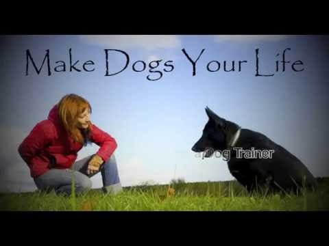how to become a licensed dog trainer