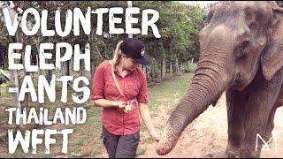 Elephant Sanctuary Thailand (Volunteer with Elephants!) WFFT