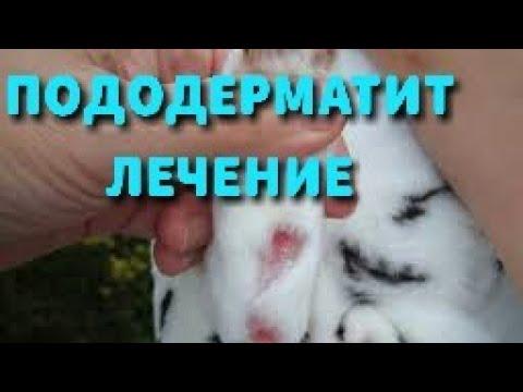 Пододерматит или натоптыши у кроликов. Лечение болячек на лапах, симптомы и профилактика.